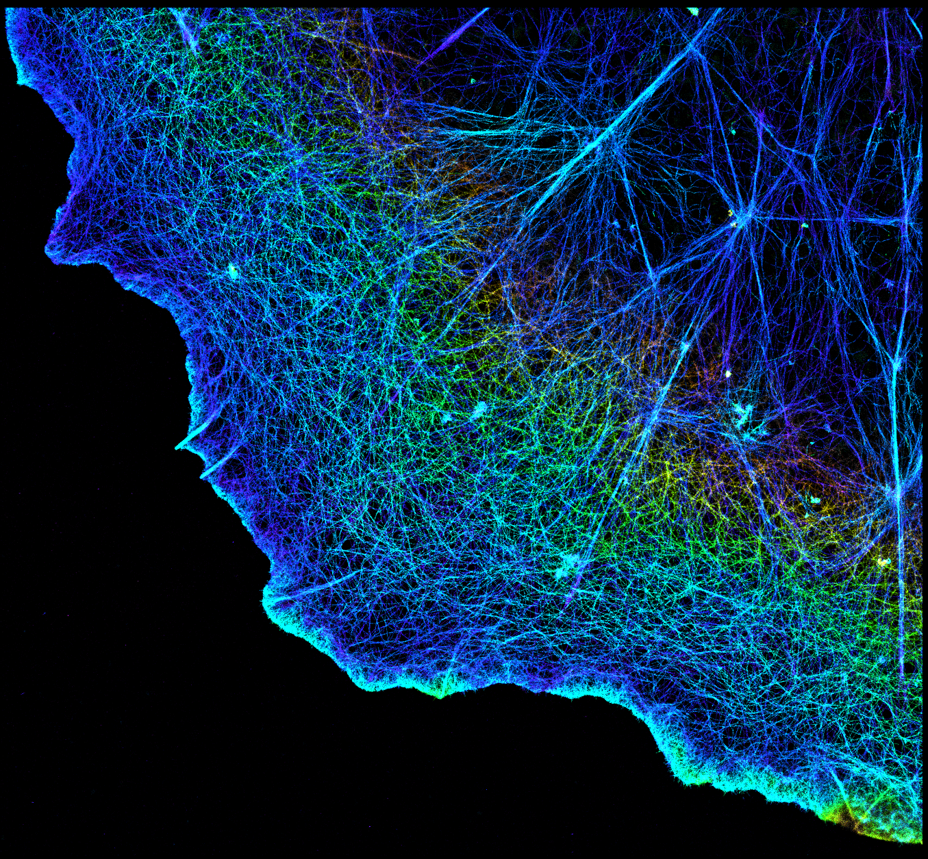NIH Image gallery image - 3D image of actin in a cell